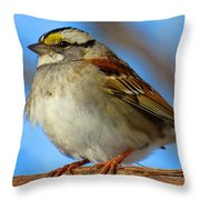 White Throated Sparrow And Blue Sky Throw Pillow