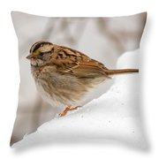 White-throated Sparrow Throw Pillow