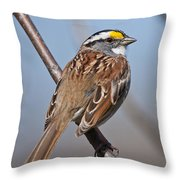 White-throated Sparrow Pictures 108 Throw Pillow
