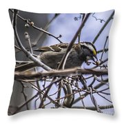 White-throated Sparrow With Berry Throw Pillow