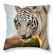 White Tiger At Sunrise Throw Pillow