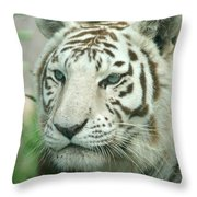 White Tiger Throw Pillow by Karen Lindquist