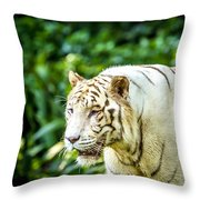 White Tiger Portriat Throw Pillow