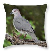 White-tipped Dove Throw Pillow