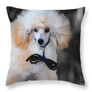 White Toy Poodle Throw Pillow
