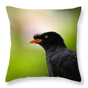 White Vented Myna Bird With Feathers Standing Above Beak Throw Pillow