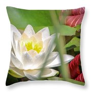 White Water Lilly Or Lotus Flower Throw Pillow