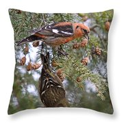 White-winged Crossbills Throw Pillow