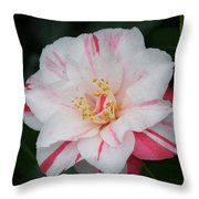 White With Pink Camellia Throw Pillow