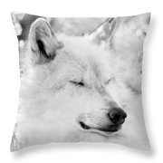 White Wolf Shut Eye Throw Pillow
