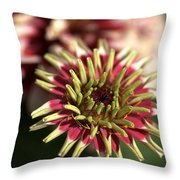 White Zinnia Throw Pillow
