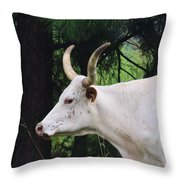 Whitepark Throw Pillow