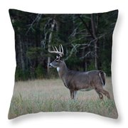 Whitetail Buck 1 Throw Pillow
