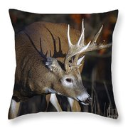 White-tailed Deer Antler Shadow Throw Pillow