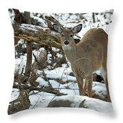 Whitetail Deer Doe In Snow Throw Pillow