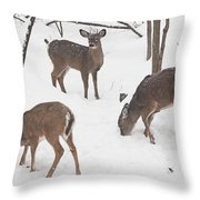 Whitetail Deer In Snowy Woods Throw Pillow