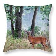 Whitetail In Velvet Throw Pillow