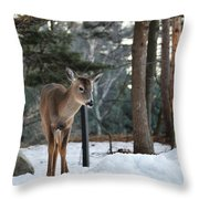 Whitetail In Woods Throw Pillow