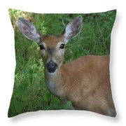 Whitetail Portrait In Valley Forge National Park Throw Pillow