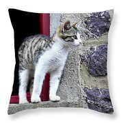 Who Goes There - Kitten Throw Pillow