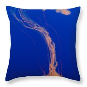 Who What Where When Purple Striped Jelly 1 Throw Pillow