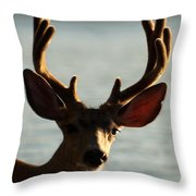 Who Ya Looking At Throw Pillow
