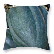 Whole Acorn Squash Art Prints Throw Pillow