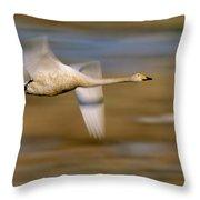 Whooper Swan Cygnus Cygnus Flying Throw Pillow