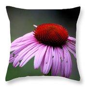 Wickham Park Coneflower  Throw Pillow
