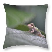 Wide-eyed Baby Throw Pillow