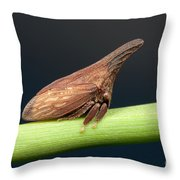 Widefooted Treehopper II Throw Pillow