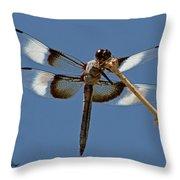 Widow Skimmer  Throw Pillow