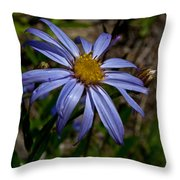 Wild Aster Flower Throw Pillow