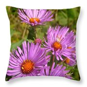 Wild Asters Throw Pillow