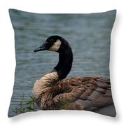 Wild Beauty - Canadian Goose Throw Pillow