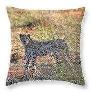 Wild Beauty... Throw Pillow