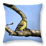 Wild Birds - American Goldfinch Throw Pillow