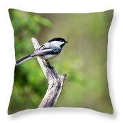 Wild Birds - Black Capped Chickadee Throw Pillow