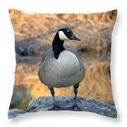 Wild Canadian Goose Throw Pillow