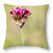 Wild Carnation With Nocturnal Moth Throw Pillow
