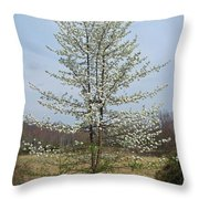 Wild Cherry Tree In Spring Bloom Throw Pillow