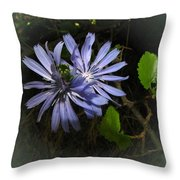 Wild Chickweed 2013 Throw Pillow