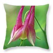 Wild Columbine Wildflower - Aquilegia Canadensis Throw Pillow