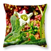 Wild Cucumber In Park Sierra Near Coarsegold-california  Throw Pillow