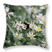 Wild Daisies And The Bumblebee Throw Pillow