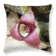 Wild Ginger Flower - Asarum Canadense Throw Pillow