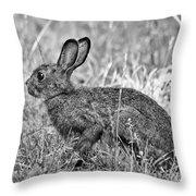 Wild Hare Throw Pillow