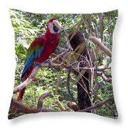 Wild Hawaiian Parrot  Throw Pillow