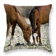 Wild Horses Grazing  Throw Pillow