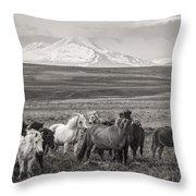 Wild Icelandic Horses Throw Pillow